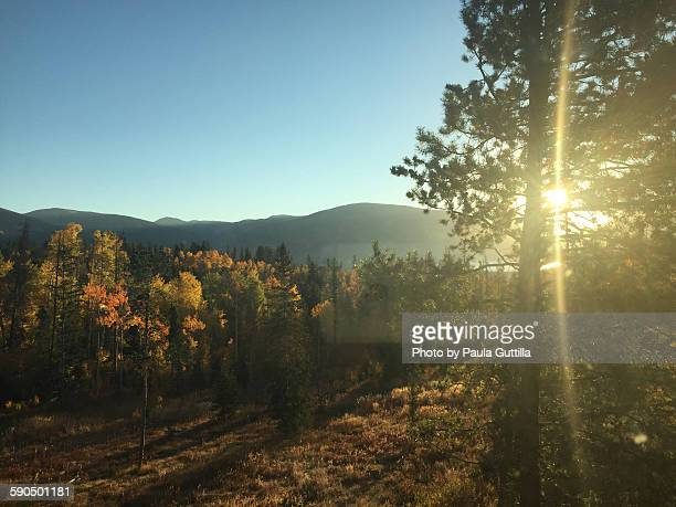 lens flare - silverthorne stock photos and pictures