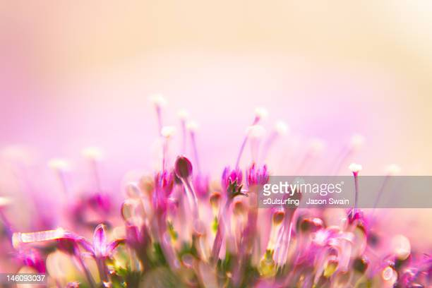 lensbaby floral bokeh - s0ulsurfing stock pictures, royalty-free photos & images