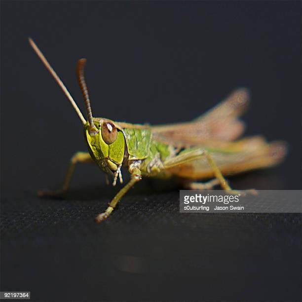 lensbaby wetsuit grasshopper - s0ulsurfing fotografías e imágenes de stock