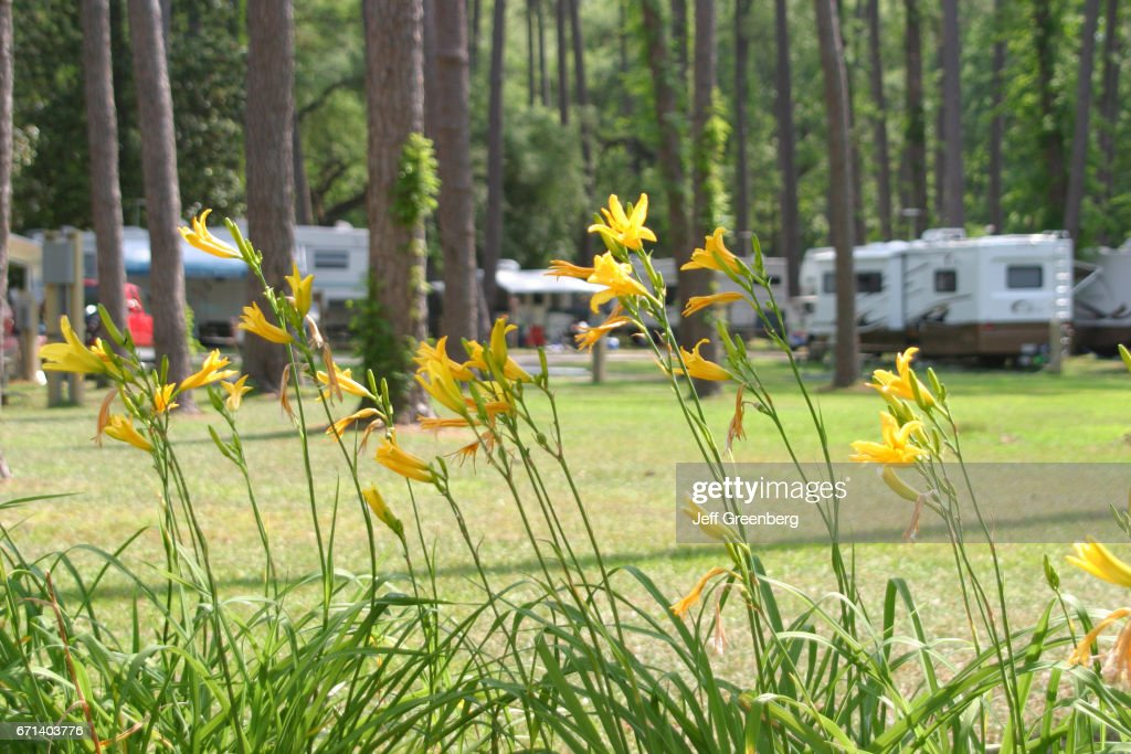 Lent lilies at Fairview-Riverside State Park  News Photo