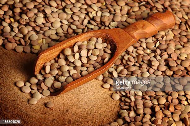 lentils and scoop - lentil stock pictures, royalty-free photos & images
