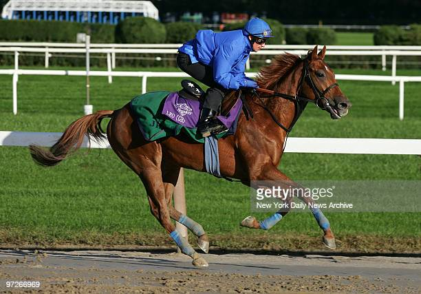Leo runs the track at Belmont Park in preparation for the 2005 Bessemer Trust Breeders' Cup Juvenile one of eight races in the 22nd Breeders' Cup...