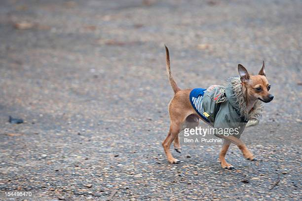 Leona Lewis' dog 'Misty' attends a photocall ahead of the Hopefield Animal Sanctuary charity walk at Hopefield Animal Sanctuary on October 21 2012 in...