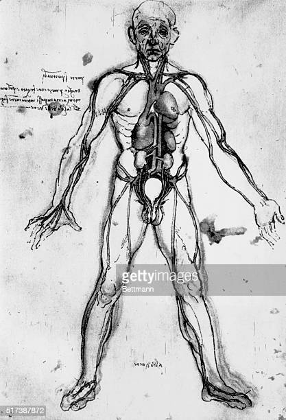 Anatomical figure from his note books Undated illustration BPA2# 2848