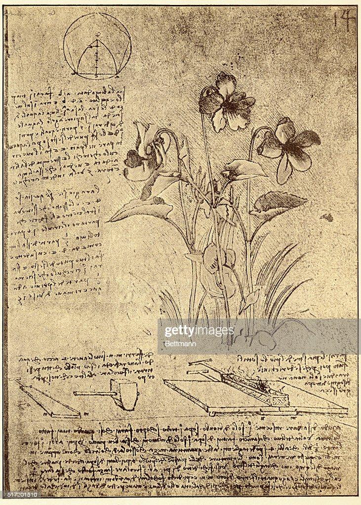 leonardo da vinci drawings of plants