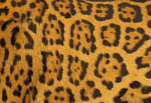 Leopard Fur Wall Art