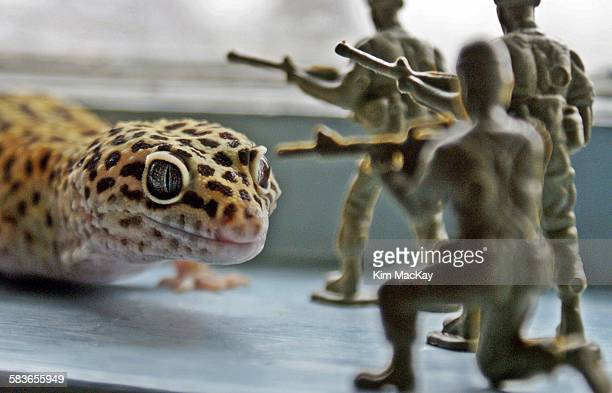 Leopard gecko vs toy soldiers