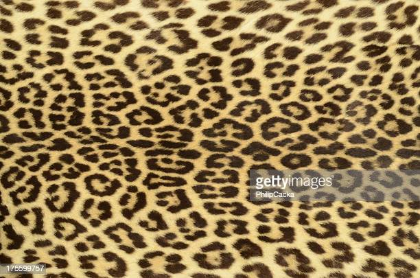 leopard hide - leopard skin stock pictures, royalty-free photos & images