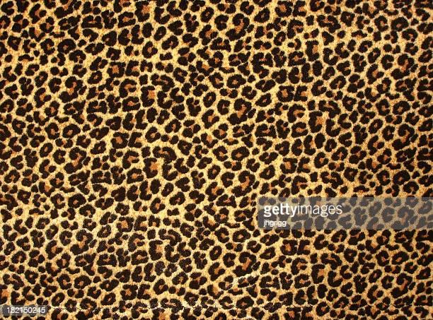 estampa de leopardo 2 - animal - fotografias e filmes do acervo