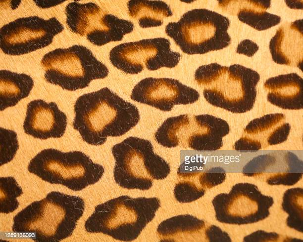 leopard print pattern - leopard print stock pictures, royalty-free photos & images