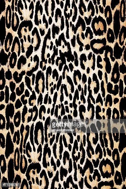 textura de pele de leopardo - pele de leopardo - fotografias e filmes do acervo