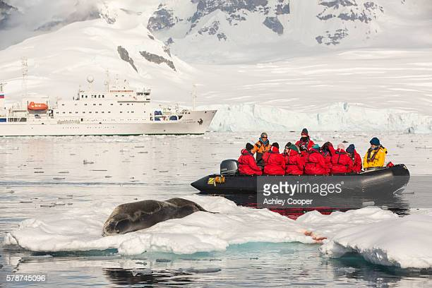 A Leopard Seal (Hydrurga leptonyx) hauled out on an iceberg in the Drygalski Fjord, Antarctic Peninsular, with a Zodiak full of yourists on an expedition cruise. The Antarctic Peninsular is one of the most rapidly warming areas of the planet.