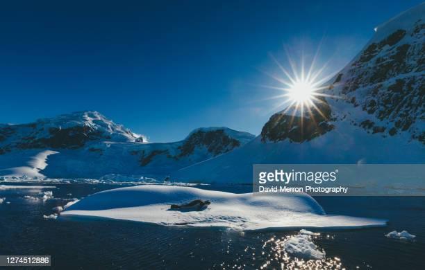 leopard seal on top of iceberg in antarctica - antarctic sound foto e immagini stock
