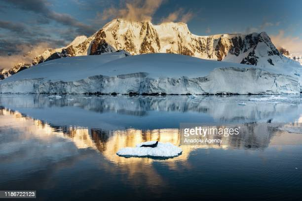 A leopard seal rests on ice in Lemaire Channel a strait off Antarctica between Kiev Peninsula in the mainland's Graham Land and Booth Island on...