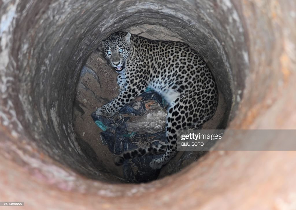 Leopard rescued from dry well in Assam
