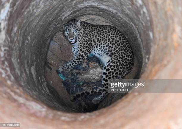 A leopard sits in a dry well before being tranquilised and rescued by Indian forest officials in a residential area of Guwahati on December 13 2017 A...