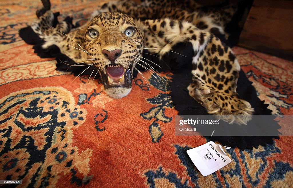 A Leopard Skin Rug With Mounted Head Available For Auction