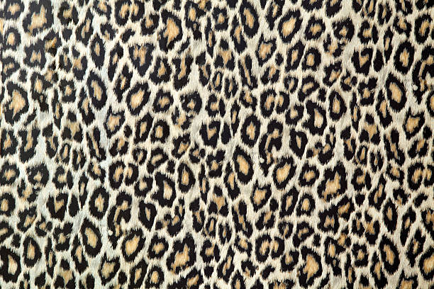 Leopard skin texture or fabric