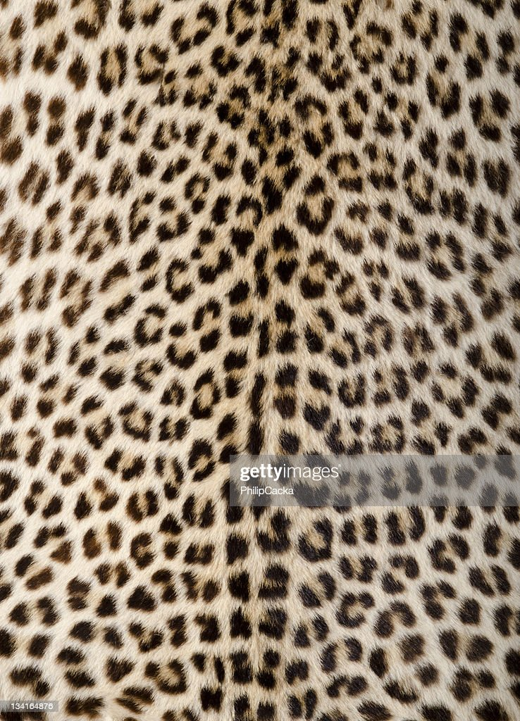 Leopard Skin/Hide : Stock Photo