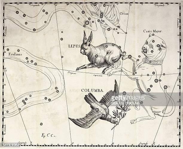 Lepus et Columba the austral constellations of the Hare and the Dove illustration taken from Johann Hevelius's star atlas Firmamentum Sobiescianum...