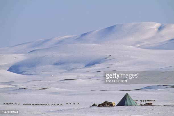 Les arrets se font toujours dans des zones ou il y a suffisamment de ''biella'' pour que les rennes puissent reprendre des forces Le ''lavvu'' la...