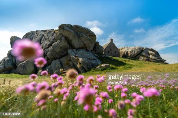 les caraïbes de bretagne en été : fleurs à meneham - bretagne photos et images de collection