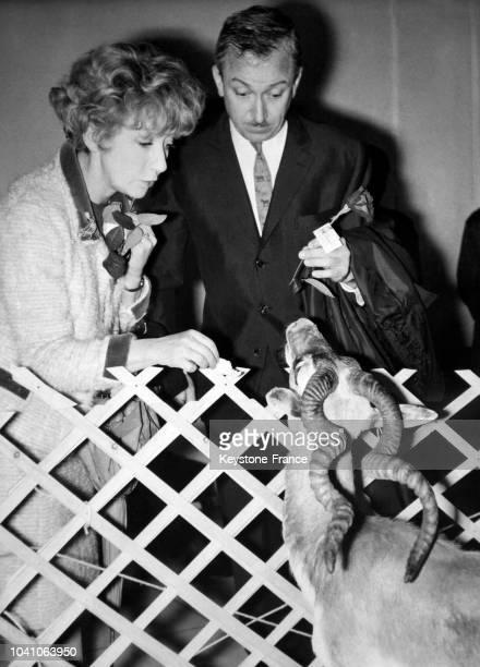 Les comédiens français Colette Brosset et son époux Robert Dhéry accueillent une antilope avec une rose à l'aéroport d'Orly dans le cadre d'une...