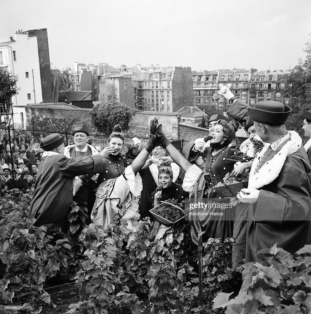 Vendanges au Clos-Montmartre : News Photo