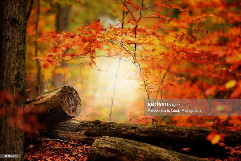 Les Forestières : Stock Photo