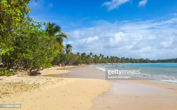 les salines beach - isla martinica fotografías e imágenes de stock