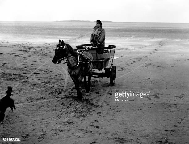 Les Smith driver of the 'love trap' drives across the sands to the mainland with Hilbre Island behind him 29th September 1954