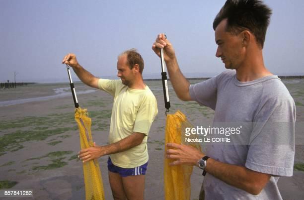 Les techniciens Serge Le Bozec et Joel Charrier du CEVA etudient les marees vertes dans les Cotes d'Armor en juillet 1993 a Pleubian France