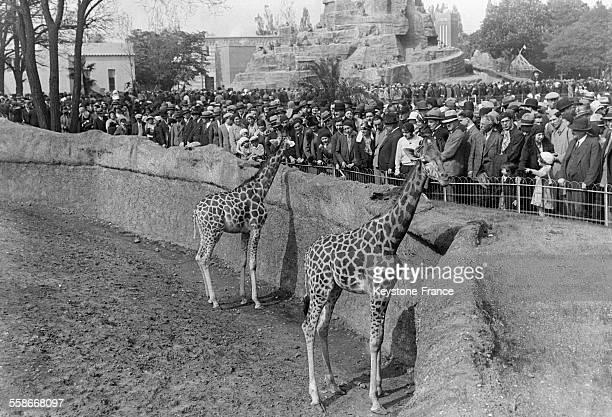 Les visiteurs du zoo de Vincennes admirent les girafes dans leur enclos circa 1930 à Paris France
