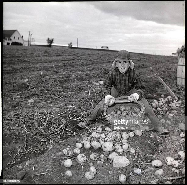 Leslie Gardner harvests potatoes on Beckwith Farm to earn money for clothes and help with the family income The schools close during the harvest...