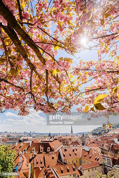 Lesser Town (Mala Strana) seen through the branches of flowering trees Prague, Czech Republic