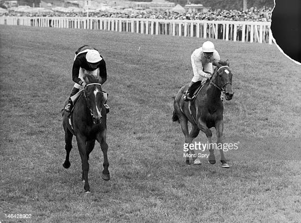 Lester Piggott on Ardross wins the Gold Cup at Royal Ascot with Willie Carson on Shoot A Line a close second 18th June 1981