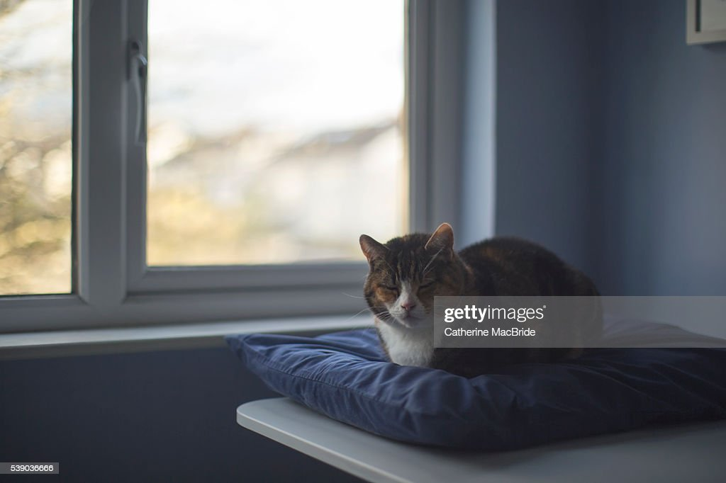 Let sleeping cats lie... : Stock Photo
