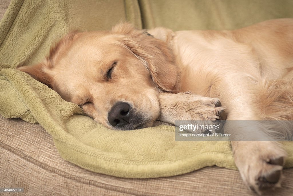 Let sleeping dogs lie : Stockfoto
