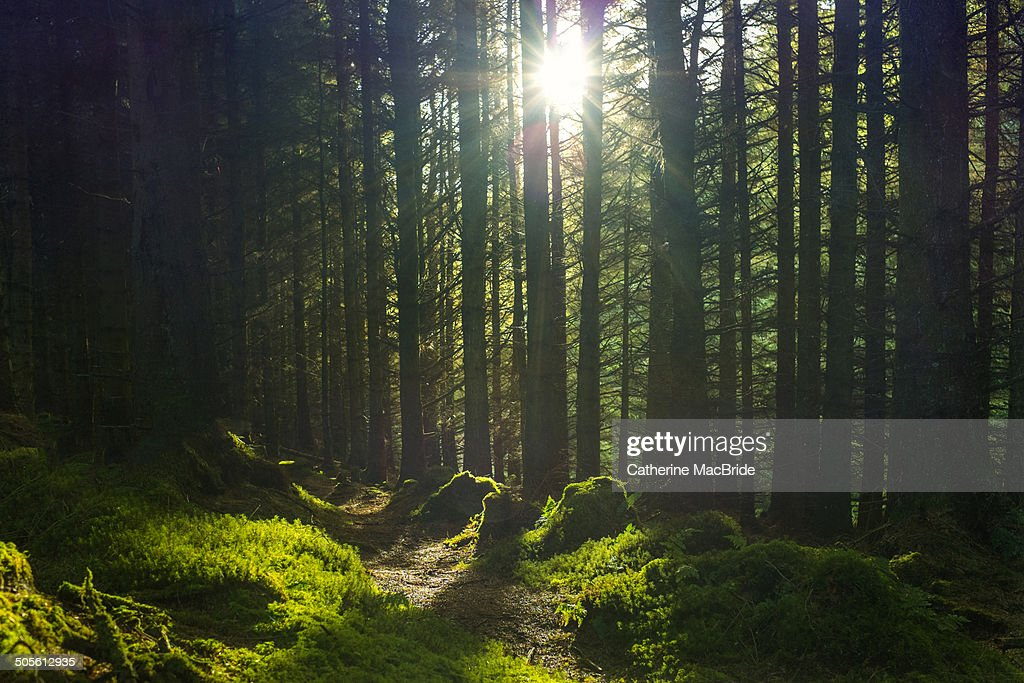 Let the sunshine : Stock Photo