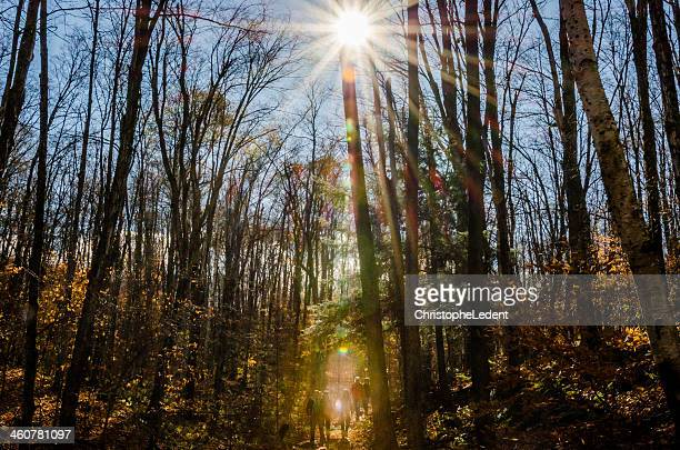 let there be light - gatineau stock photos and pictures