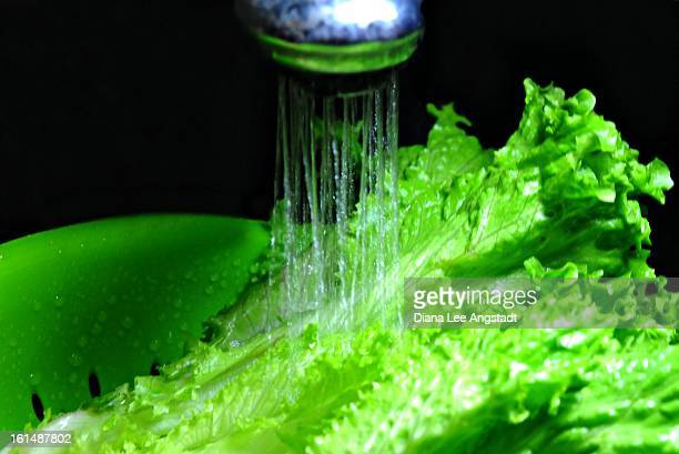 let us - romaine lettuce stock photos and pictures