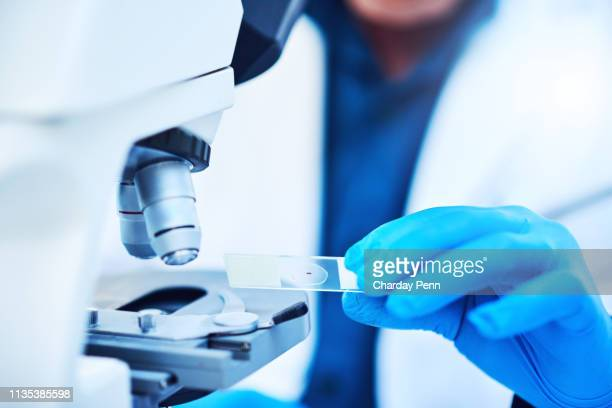 let's make some sense of this sample - microscope stock pictures, royalty-free photos & images
