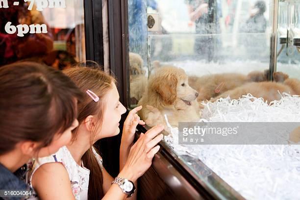 Vamos tomar esta cachorrinho