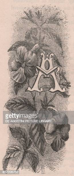 Letter A drop cap letter engraving cm 10x5 by Frederick Edward Hulme from The familiar Garden Flower circa 1880
