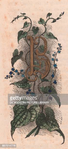 Letter B drop cap letter watercolour engraving cm 10x5 by Frederick Edward Hulme from The familiar Garden Flower circa 1880