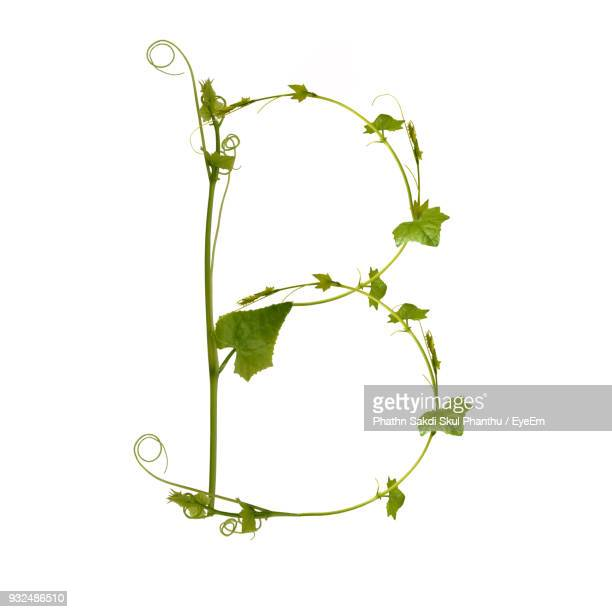 letter b made with plant against white background - nature alphabet letters stock pictures, royalty-free photos & images