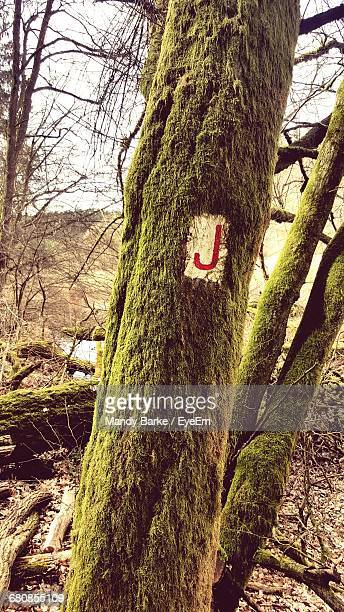 letter j on mossy tree trunk in forest - letra j - fotografias e filmes do acervo