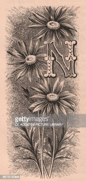 Letter N drop cap letter engraving cm 10x5 by Frederick Edward Hulme from The familiar Garden Flower circa 1880