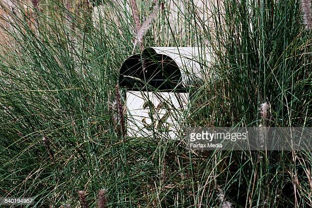 Letterbox surrounded by pampas grass