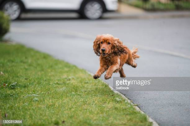 letting the dog run - residential district stock pictures, royalty-free photos & images